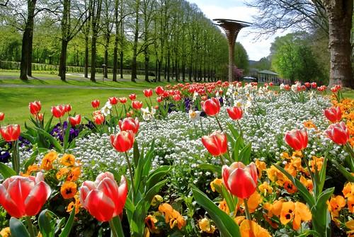 Blumenpracht im Bad Mergentheimer Kurpark.