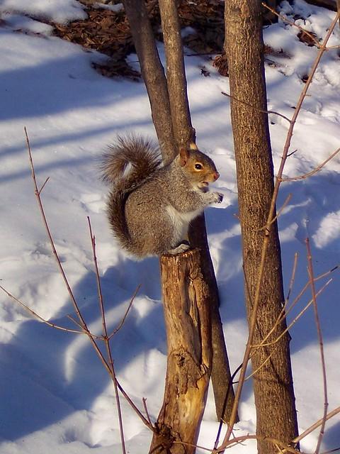 Fig Newton Squirrel  02-06-2009 (4)