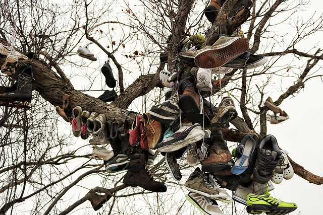 Under the shoe tree