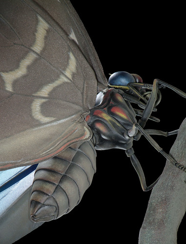Audubon Metamorphosis - 04