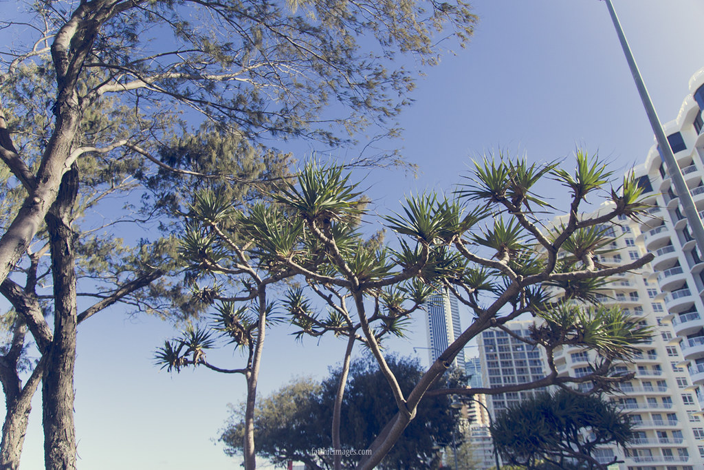 Buildings and trees in surfers paradise, australia