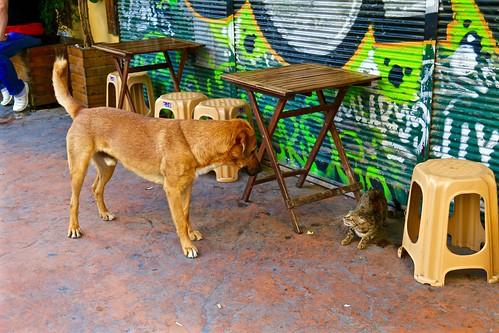 Street pets