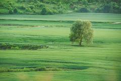 Tree   Lithuania