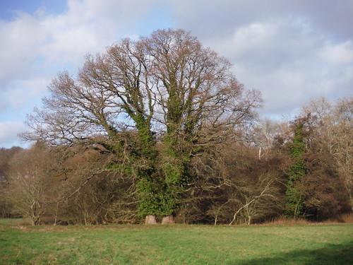 Tree across Field