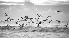 Birds @ sea
