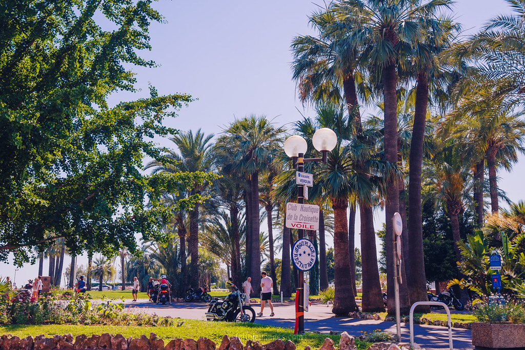 Greenery at the Californie