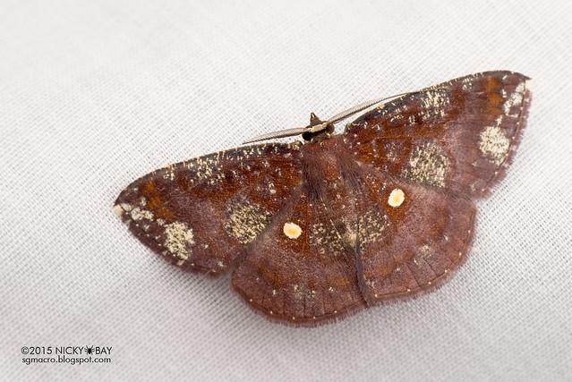 Moth - DSC_4068