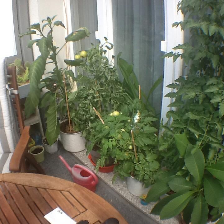 Tomaten --- Tomatoes