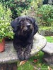 Sat, Aug 1st, 2015 Lost Female Dog - Killabeg, Enniscorthy, Wexford by Lost and Found Pets Ireland