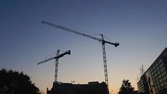 DC Dance of the Cranes 59090
