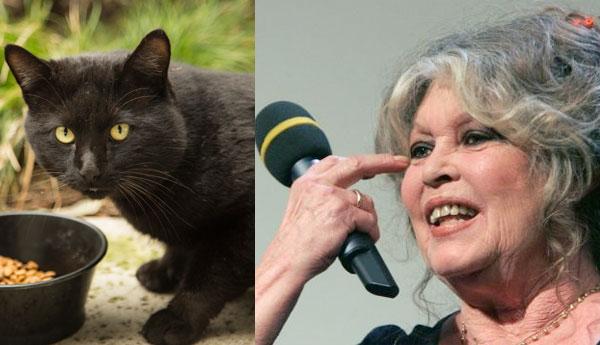 brigitte-bardot-feral-cat