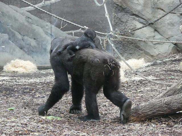 Shira und Wela, Zoo Frankfurt