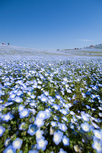 Hitachi Seaside Park 2