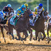 American Pharoah at the start of the race at Belmont by diana_robinson