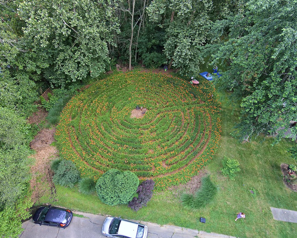Daylily labyrinth in bloom