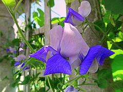 In The Rose Garden's Pavillion
