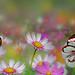 Glasswing Butterflies by Reg Ramai