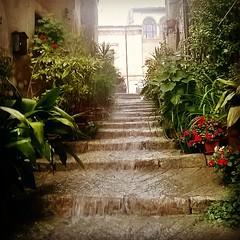 #navelli #abruzzo #italy #laquila #pioggia #diluvio #meteo #centrostorico #borghitalia #borghipiubelli #expoborghi #tempo #love #igers #ig_laquila #visitabruzzo #ig_europe #igersitalia #vivoabruzzo #abruzzoitaly #flower #ig_flovers #fiore #flor #yourabruz