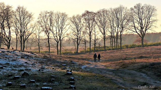 A little bit of winter - Plantage Willem III