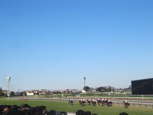 中山競馬場の直線走路