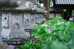 石塔と紫陽花