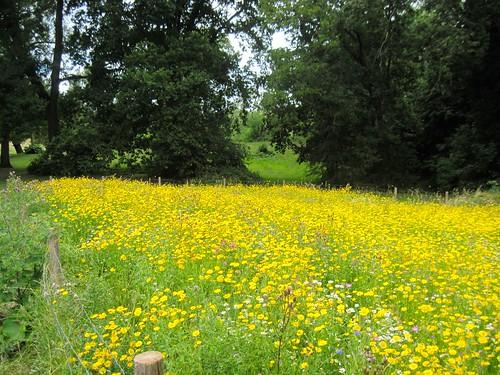 Meadow in Hampstead Heath