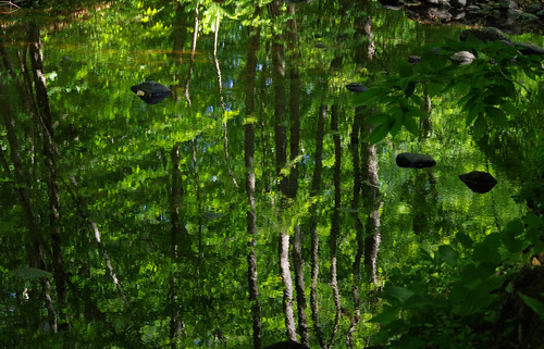 park trees reflection green water woods stream pentax connecticut newengland ct brook k3 2015 vbd chatfieldhollowstatepark smcpentaxda55300mmf458ed summer2015