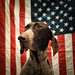The Patriot by MilkaWay