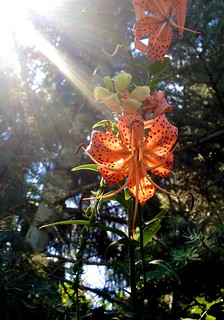 Les fleurs du Botanic Garden