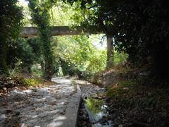 Ιούλιος, καλοκαίρι, Ψίνθος 2015