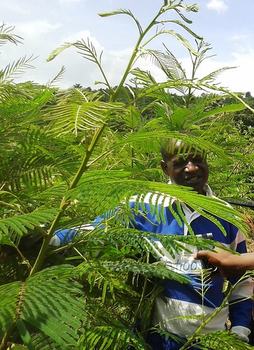 Joshua Kankonko, founder of Cameroon's first and only eco-village – the Ndanifor Permaculture Eco-village in Bafut in Cameroon's Northwest Region – shows off some nitrogen-fixing trees