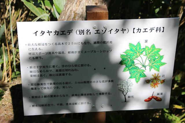 2014-07-22_02420_北海道登山旅行.jpg