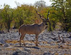 DSC09491 - NAMIBIA 2013