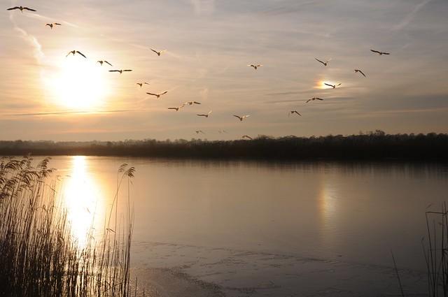 Drei Sonnen sah ich am Himmel stehn... - Nebensonne, sun dog; Meggerdorf, Stapelholm (2a)