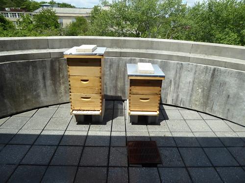 bee hives - Robbins Library, Arlington MA