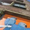 Spix macaw by @jane_mutiny shouted in Leeds #Streetart #streetartgallery #streetartleeds #humannature