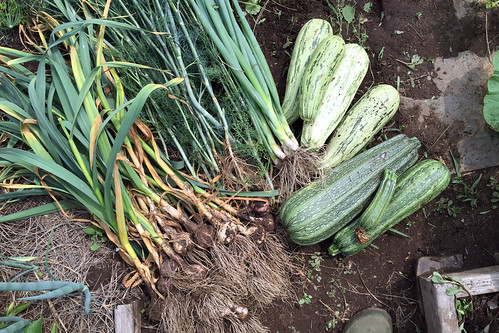 harvest IMG_2415