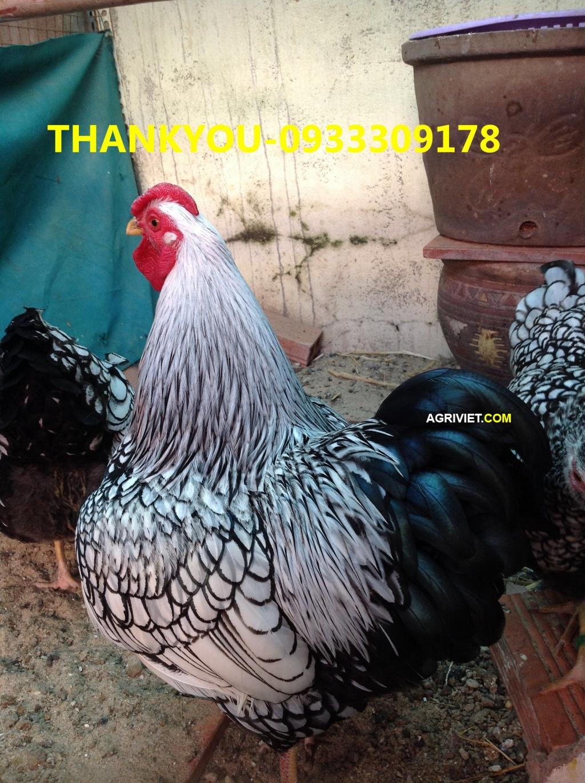 20116823785_8c6e6fa3a7_o.jpg