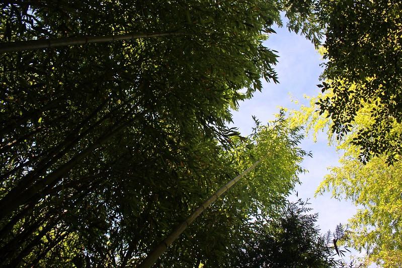 環島-新竹上帝部落-司馬庫斯隨拍 (46)