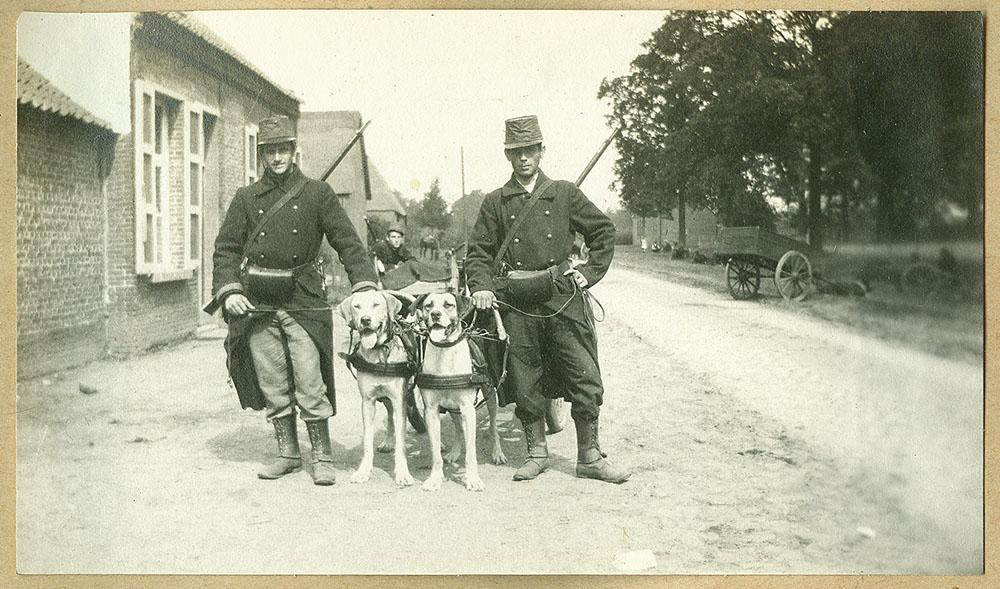 Mitrailleurs van het 7de Linieregiment poseren met hun honden | Machine gunners of the Belgian 7th Infantry Regiment pose with their dogs