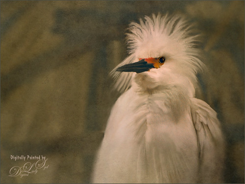 Image of a Snowy Egret up close