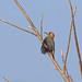 Velasquez's Woodpecker, Tehuantepec, Oaxaca, Mexico por Terathopius