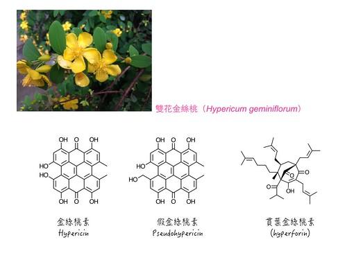 金絲桃部分成分的化學結構 。圖片來源:王升陽。