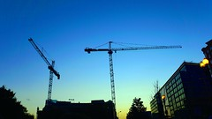 DC Dance of the Cranes 59099