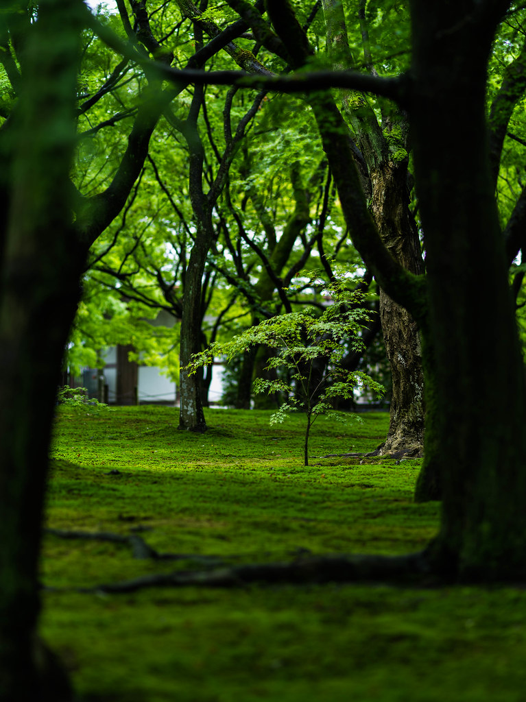 Kyoto Travel㉓