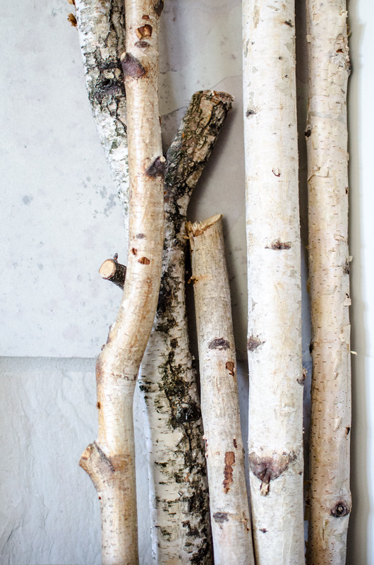 Birch logs at the Fireplace