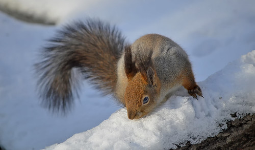 - Where's my nuts? I put them here somewhere!