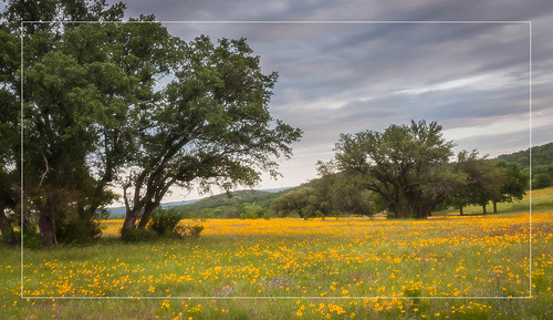 trees landscape outdoors gold us spring texas unitedstates tx wildflowers hillcountry llano