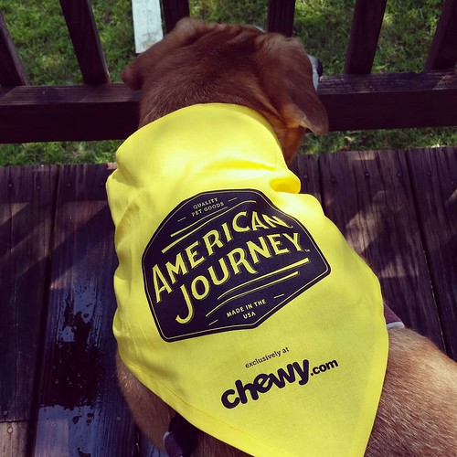 Sophie can't wait to tell you all about the brand new #AmericanJourney line of #dogtreats and #dogchews from #Chewy Stay tuned to the blog! #dogsofinstagram #houndmix #instadog #muttstagram #rescueddogsofinstagram #adoptdontshop #happydog @chewy