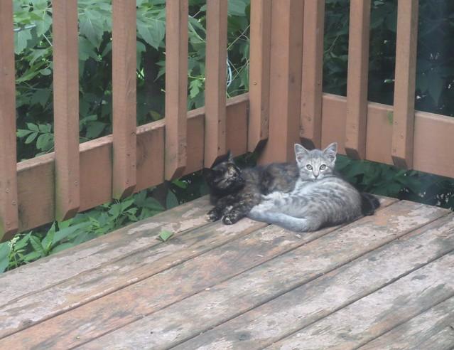 Wary feral kittens